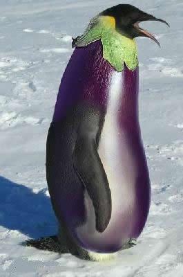 Une aubergine transgénique sur le point d'être autorisée en Inde