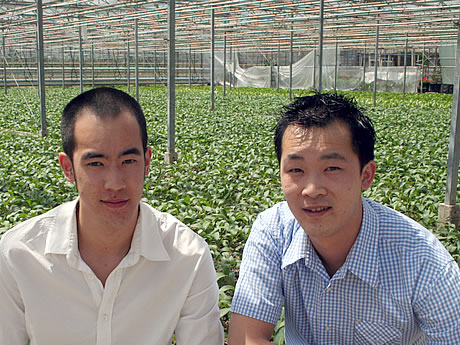 choisam, kaichoi and tongho are grown in greenhouses in Holland,