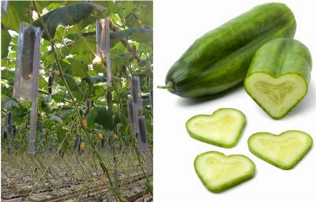 Hartvormige komkommers van hartman in schap bij albert heijn - De komkommers ...
