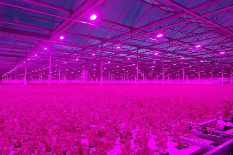 Cool grow lights