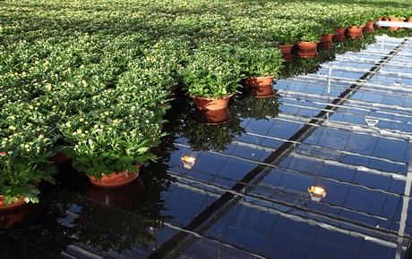 Hortidaily Com Uniform Irrigation With Ebb And Flow System