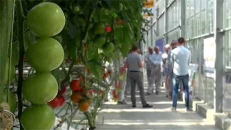 Monsanto and Bayer complementary re vegetable seeds