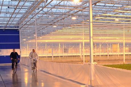 Brabant plant haarsteeg