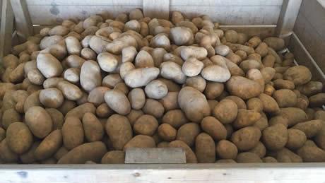 Prijs aardappelen stijgt