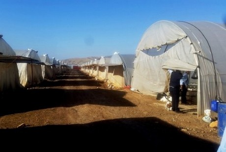 Job opportunities in greenhouse horticulture for Syrian refugees in