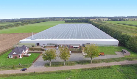 Large Dutch Strawberry Growers Adss Greenhouse For