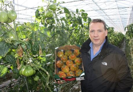 tomaat1.jpg